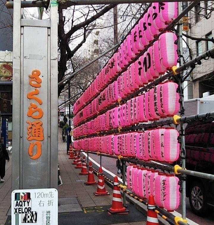 今年の渋谷・桜丘の桜まつりは・・。
