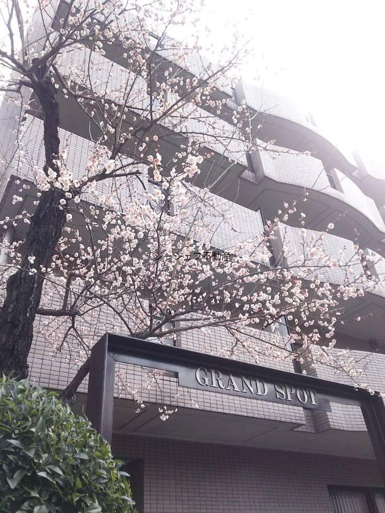 梅の花の季節 渋谷・桜丘町より