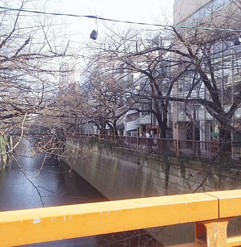 桜ももうすぐ!?中目黒・目黒川より・・