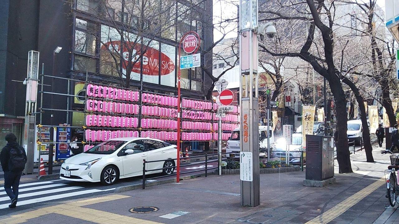 渋谷・桜丘 桜の開花が始まってます!