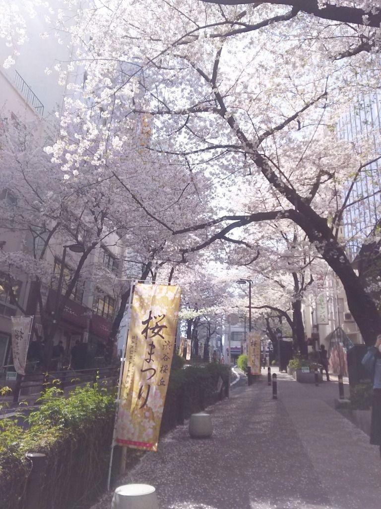 桜が満開です!渋谷・桜丘より